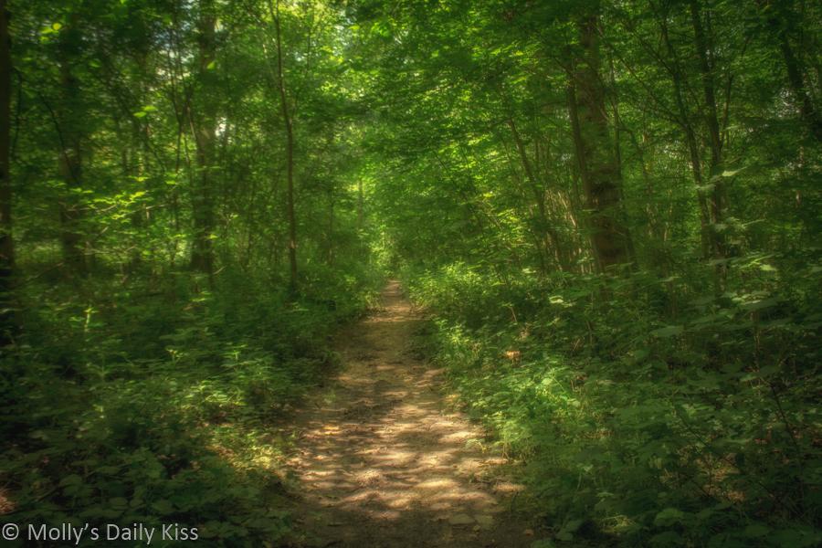 Woodland path soft focus