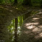 Woodland reflected in puddle reflect