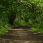 Pathway through woodland path travel
