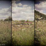 wild flowers around country gate