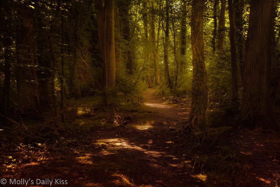 Sunlight in woodland sanctuaries