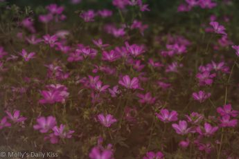 Among the Pink flowers