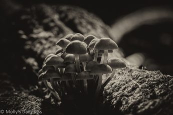 Fungus in black and white Recyclers of the world