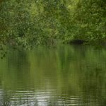 Green trees reflected in green lake ripples