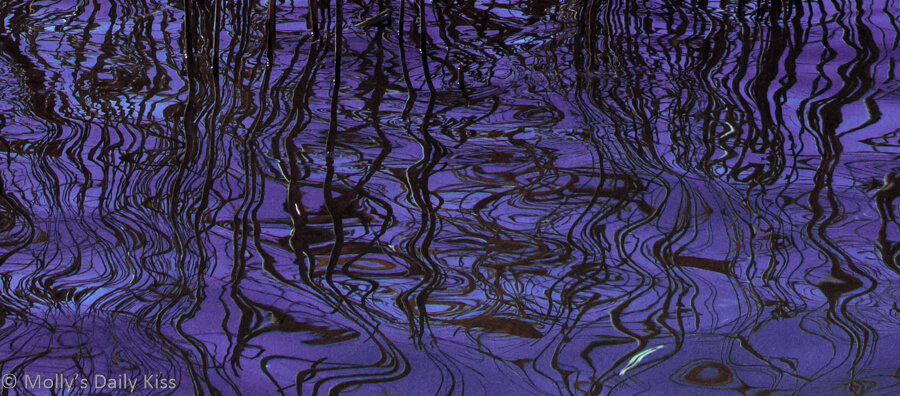 essence of Reeds reflected in water abstract