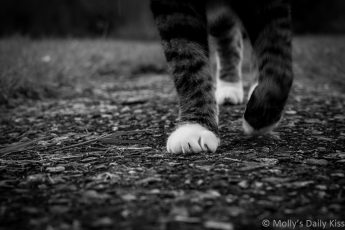 Cat feet free walking towards camera in black and white