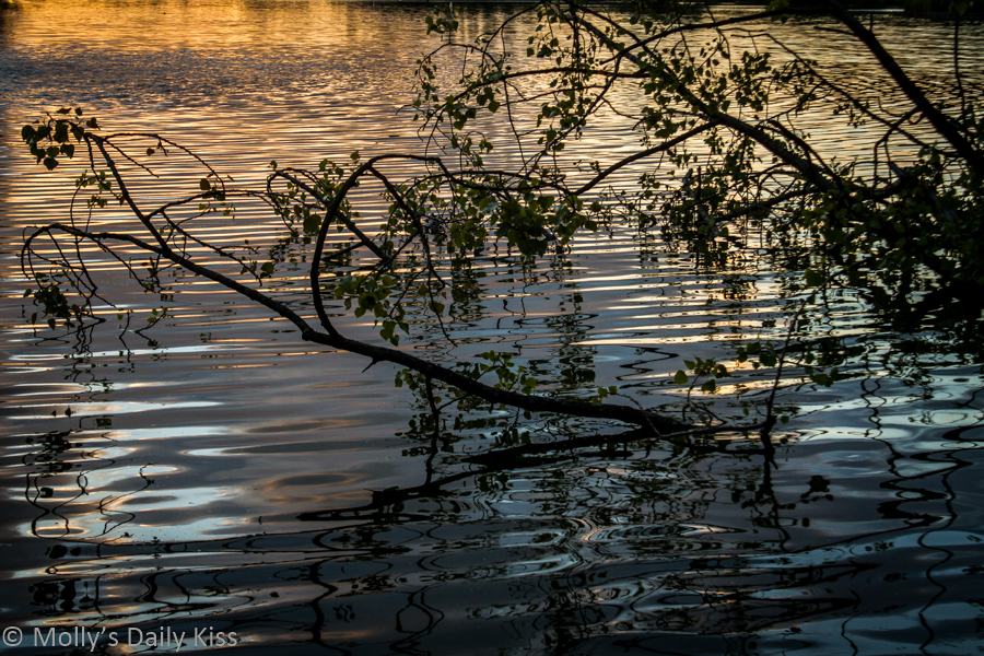 Leaves and branches reflected in pond with setting sun. October Days