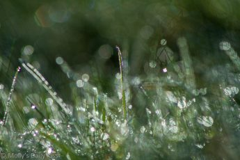 Dew in grass like little gems