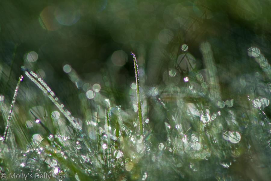 Dew in grass like little gems