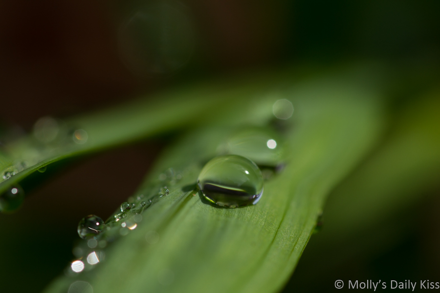 droplets of water on green stem