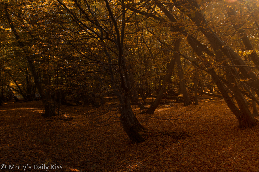 Golden Red autumn woodland colours