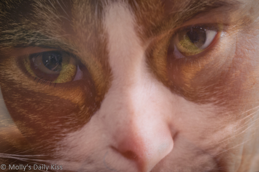 Self portrait of Molly merged with cat face over the top