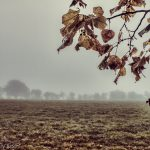 autumn winter through the leaves to a mist fog field beyond. November and December in one image