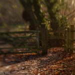 Gate into the woods with tilt and shift mini world effect edit