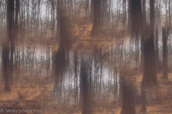 Abstract composite image of winter woodlands
