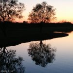 Winter trees reflected in pond with afternoon sunset