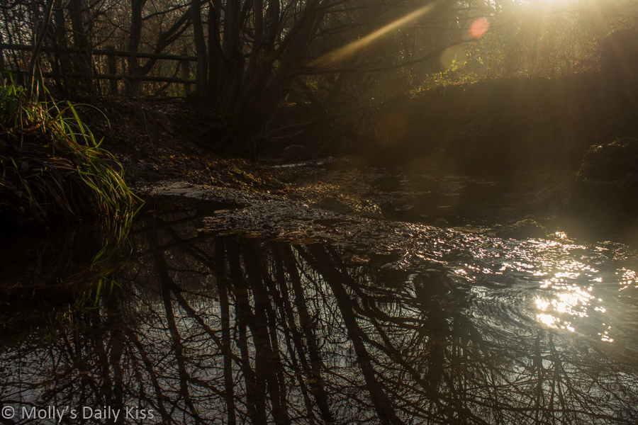 Winter sun burtsing through the trees and sparkling on the water in the stream