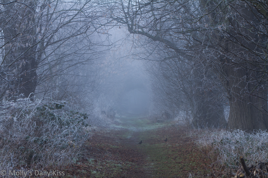 Mist and frost down country path. Winter's Embrace