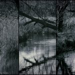 Winter trees reflected in water way