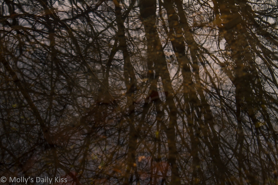 Winter trees reflected in rippling stream water