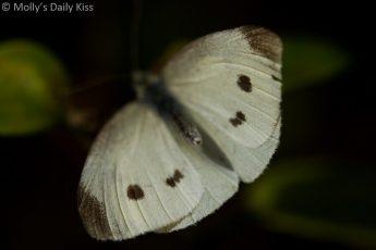 macro shot of butterfly wings with symmetry spots on