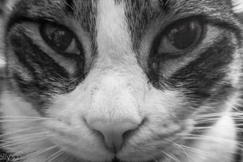 Black and white close up of cat face who thinks he is gods