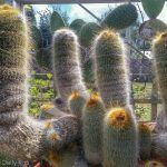 Collection of cactus