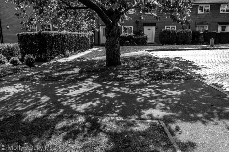 Dappled sunlight through tree in black and white