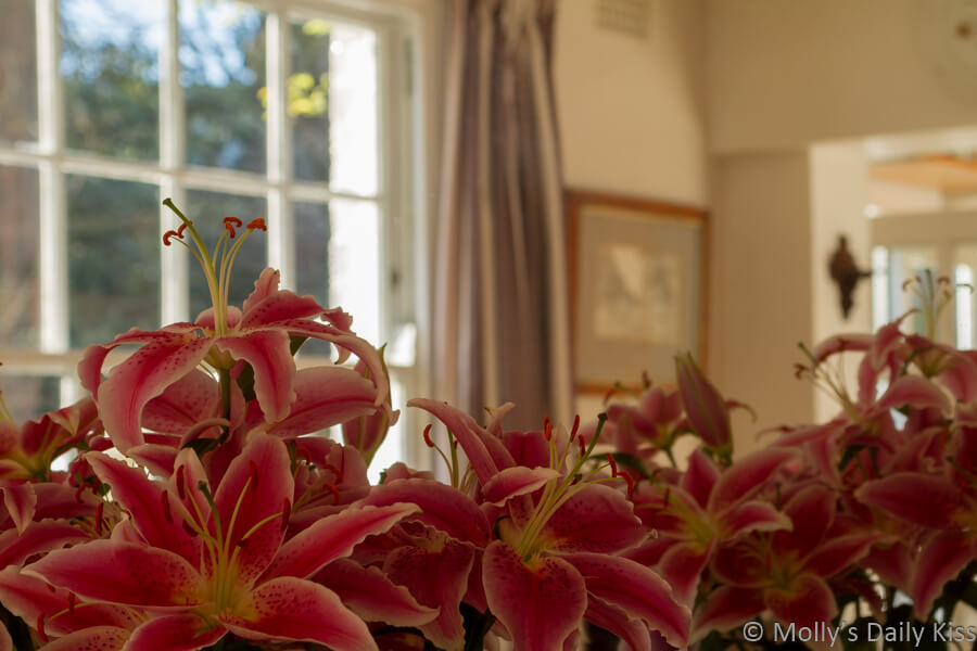 lilies and room reflected in mirror. Lily Robes