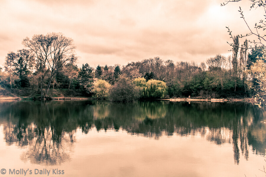 Reflection of trees in lake with vintage edit