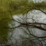 Twisted out of shape tree branches reflected in water