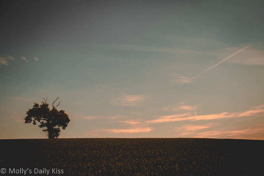 Lone tree in field with pink sky and plane trail in the sky. A moment of beauty