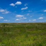 Blue skies with fluffy clouds and green grass with buttercups