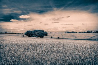 Black and white shot over wheat fields with interesting cloudy sky