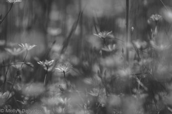wild flowers in glade of summer light in black and white