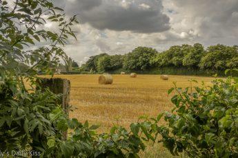 bales of hay in harvest field