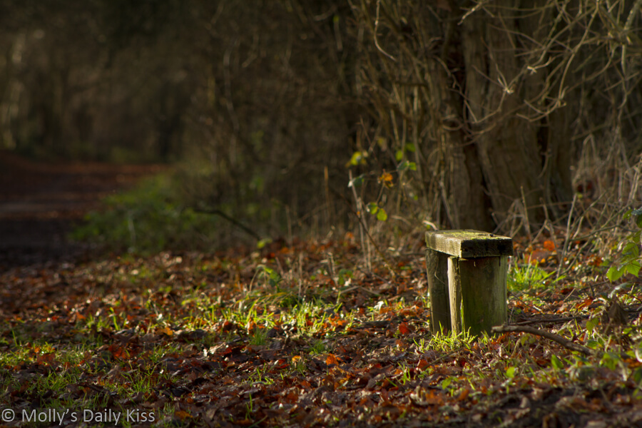 small bench in autumn sunlight on pathway