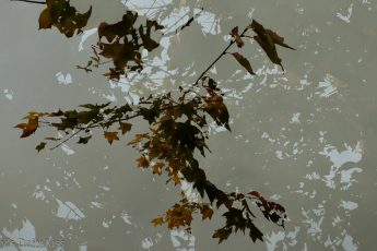 double exposure shot of autumn leaves
