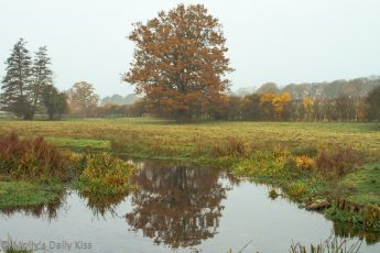russte colours of oak tree reflected in stream