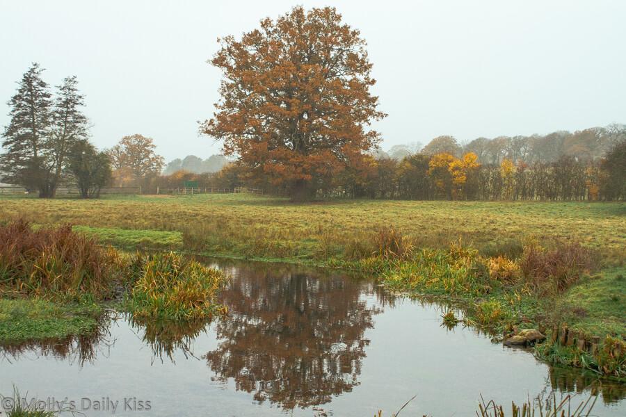 russte colours of oak tree reflected in stream