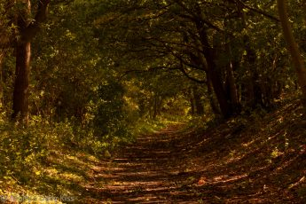 pathway through woodlands with riot of october autumn colours