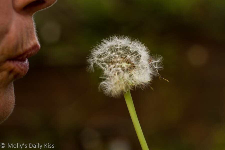 Mouth blowing dandilion wishes