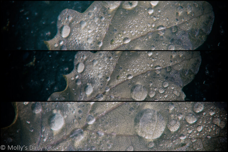 Droplets of dew on leaf on the ground in triptych