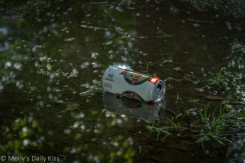 can of lager thrown into puddle in the woods