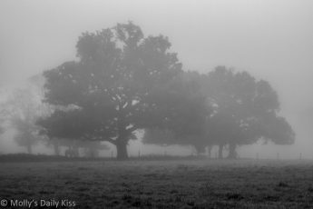 Early morning mist breath through autumn oak trees in black and white