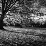 black and white of sunlight through autumn trees on crisp day
