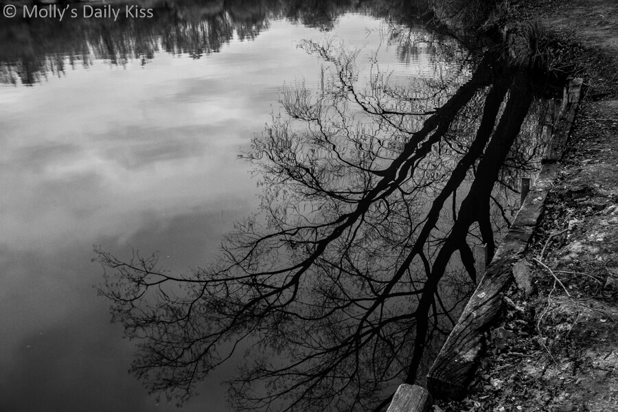 winter tree reflected in pond in black and white