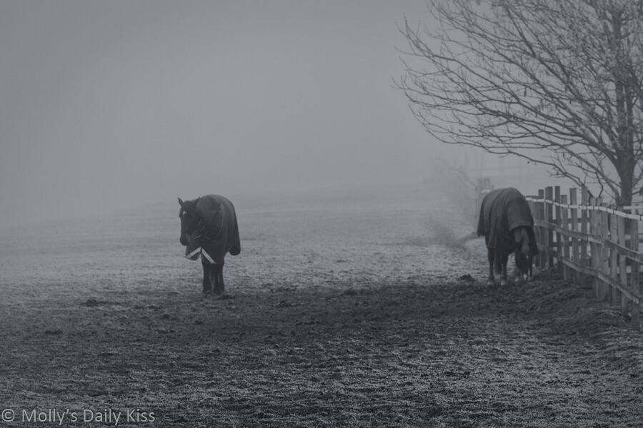 Noble Horses in field wearing winter coats with winter fin and frosted ground