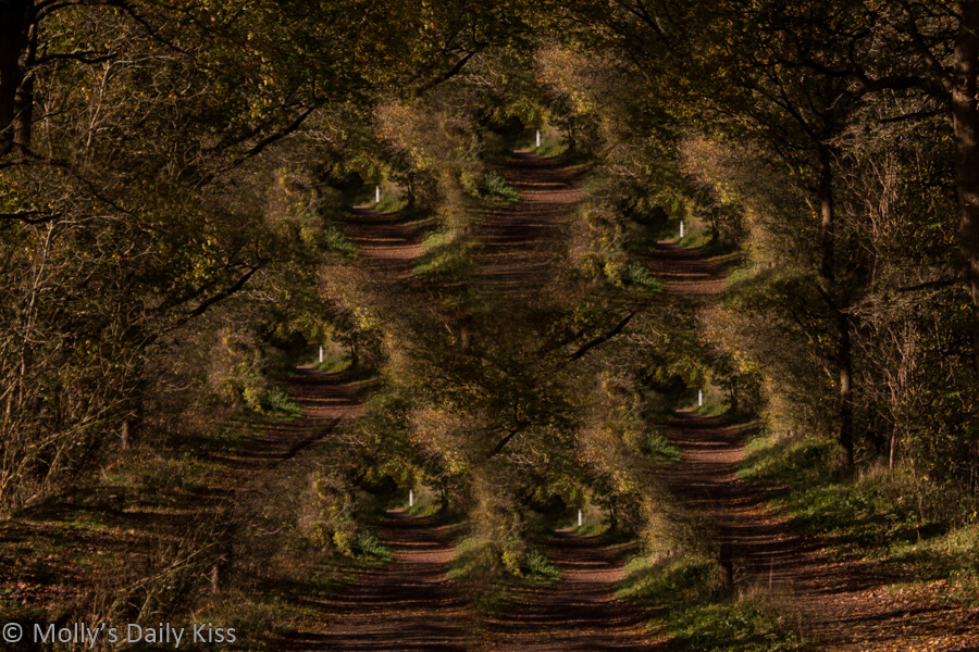Abstract of woodland path that looks like 7 different routes to pick from for post called choices.