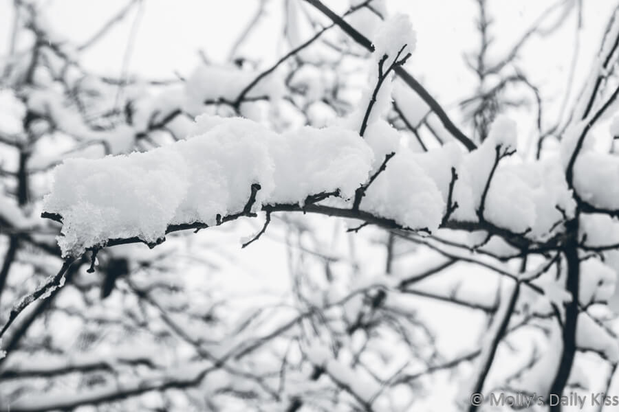 snow on tree branches in black and white